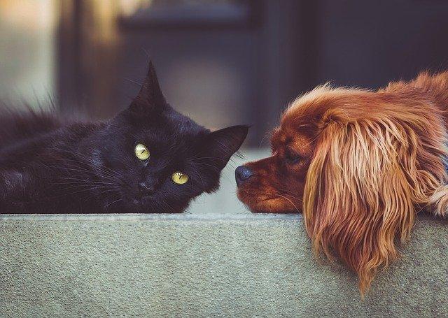 Woofcity el transporte de mascotas más efectivo de España
